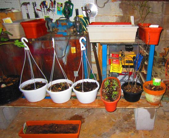 Basement garden, soon to be porch, window box, greenhouse and raised garden gardens. You read that right.