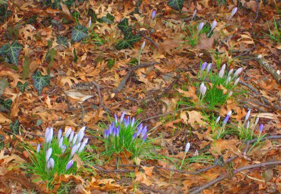 Spring! It's fucking spring!