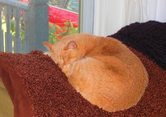 Sweetpea's favorite new snooze spot doubles as her favorite squirrel-spotting spot.