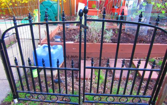 Pete fenced in the garden, then installed crooked gates, which beat all to hell last year's arrangement where my gamey hip and I were intended to climb over some chicken wire because HAHAHAHAHAHA. Now I have gates. They were on sale, for some reason.