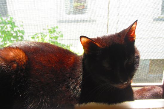 Mysterious Topaz rests in fresh breezes and lazy afternoon sun.