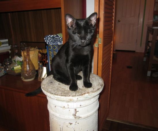 Pete looked up and discovered the tiny kitten perched atop the pillar. He panicked. She  climbed down and skipped off to climb something else.