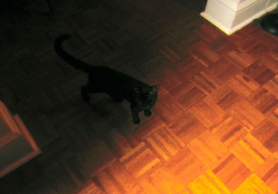 Black kitten emerging from a dark room. When I imported this image it was so dark I saw no kitten at all.