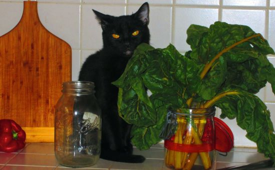 Topaz, who is not Swiss chard, is fooling no one, which I mean me.
