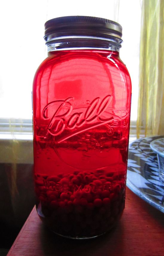 Our red currant vodka is aging gracefully in the cool, dark place where we put it and forgot about it. Yay memory loss!