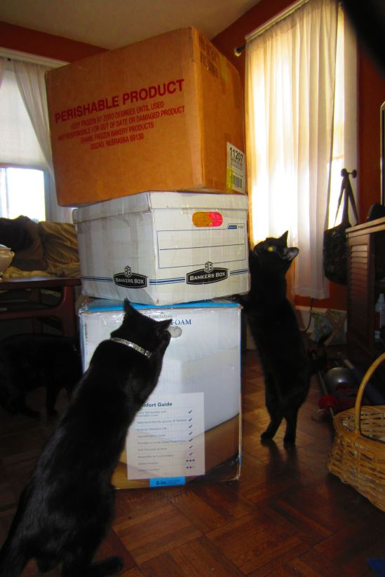 Drusy and Topaz inspect today's shipment of art supplies, by which I mean yarn from a nice person in Casper, Wyoming for the cat blanket project. If you open the door, someone else's generosity can barge in and blow your mind.