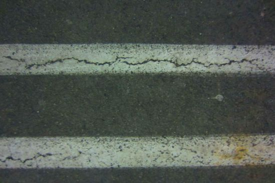 I am Princess Tata, Curator of Sidewalk Cracks, Cataloguer of Abandoned Gum.