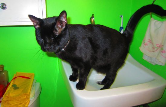 How did I, your ferocious blind kitty, find this sink and why do I like it so much? If I told you, you might quit wearing all your shoes.