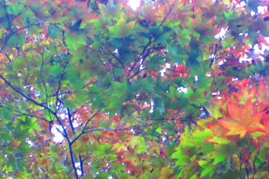 pretty pretty leaves