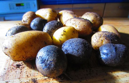 Yesterday's potato harvest will feed us for the week. I am totally in love with growing my own food and this would seem like a big accomplishment if my cousin weren't swimming the English Channel this week.