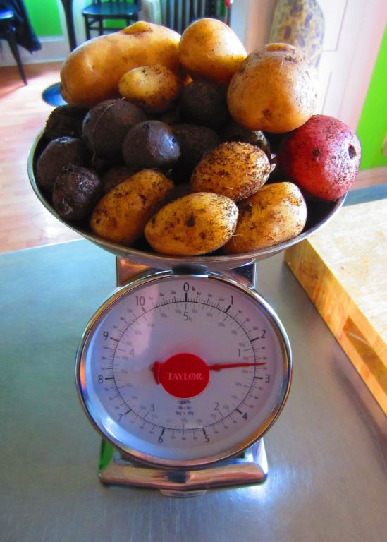 If you've ever wondered what 2.6 lbs. of homegrown potato happiness looks like, wonder no more! Also: wonder less and get out more, willya?