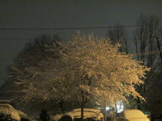 Today was the first day of spring and, tonight, the trees are so pretty they don't even look real, which is weird because trees are pretty.