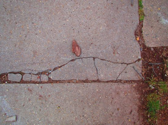 This wood chip plotted its escape from the yard, but did not get far.