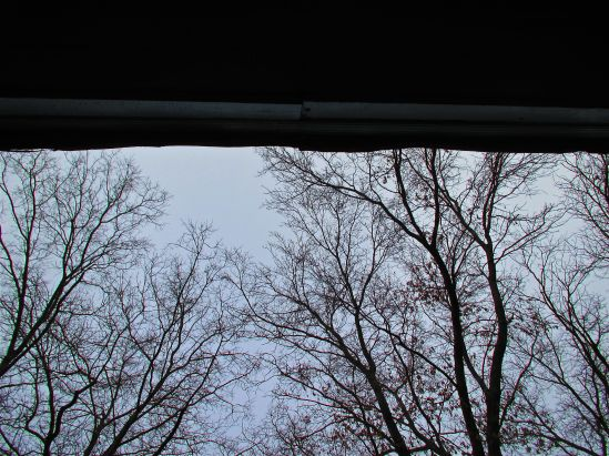 Last week, I looked up and saw nothing but sticks.