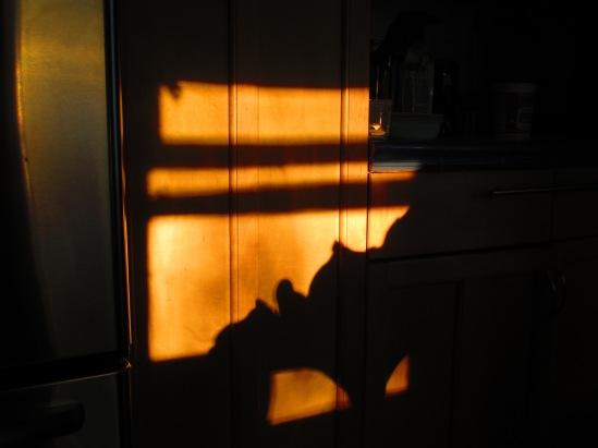 shadowy.jpg