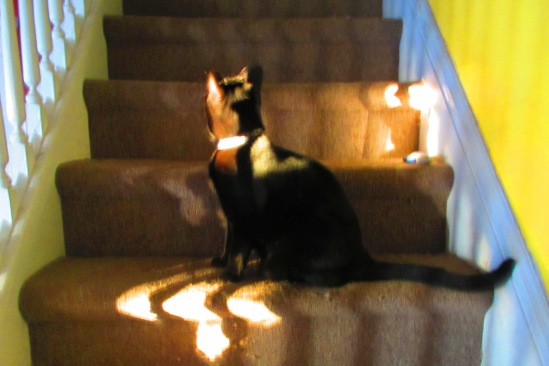 the blind cat can find sunbeams, while I am outwitted by yogurt.