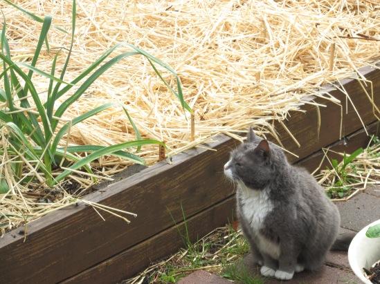 Kitty Cat, in her kitty kingdom.