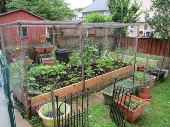 I cannot overstress how tiny this garden is.